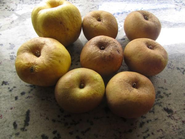 Membrillo de manzana Thermomix